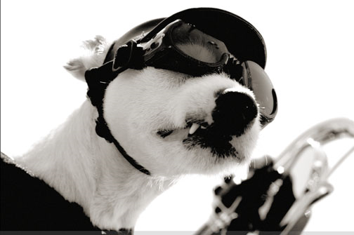 Motorcycle Goggles, Motorcycle Riding Glasses, Pugs Gear